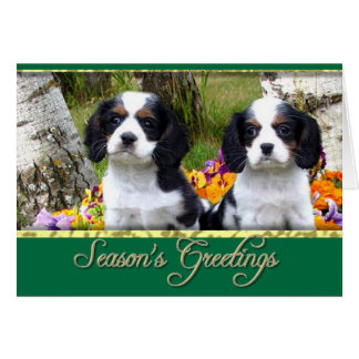 King Charles Spaniel puppies Card