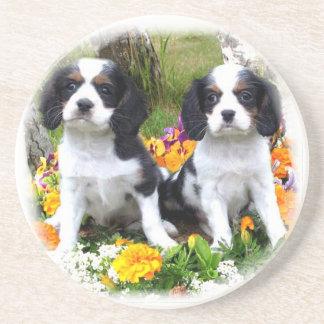 King Charles Spaniel puppies Coaster