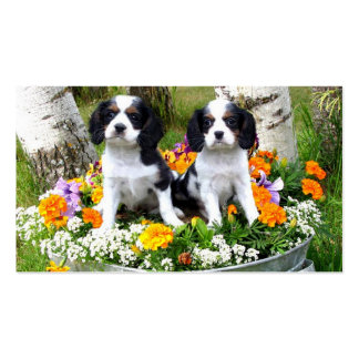 King Charles Spaniel puppies Double-Sided Standard Business Cards (Pack Of 100)