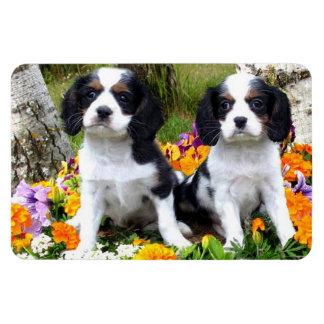 King Charles Spaniel puppies Magnet