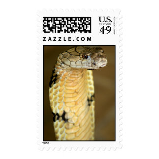 king cobra stamp