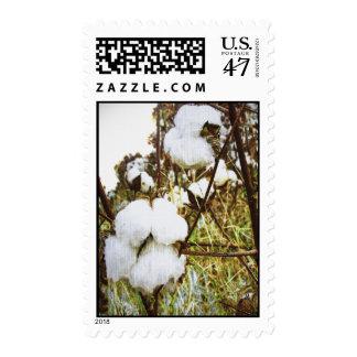 King Cotton Postage