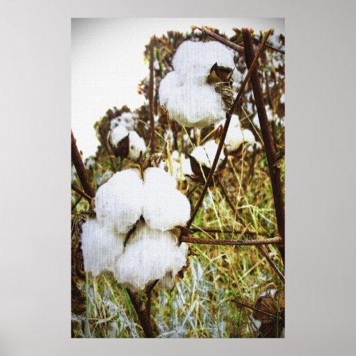 King Cotton Print