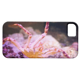 King Crab iPhone 5 Covers