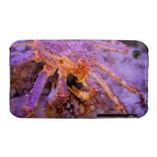 King Crab iPhone 3 Covers