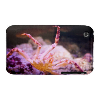 King Crab iPhone 3 Cover