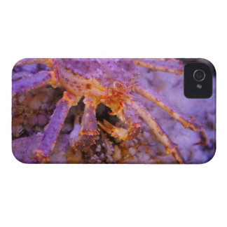 King Crab iPhone 4 Covers