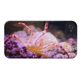King Crab iPhone 4 Case-Mate Case