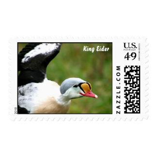 King Eider Duck Postage