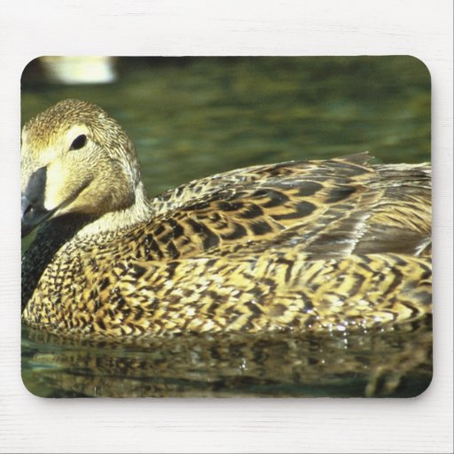 King Eider Hen Mouse Pads