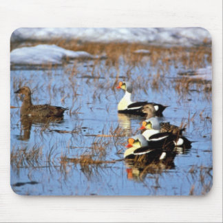 King Eiders Mouse Pad