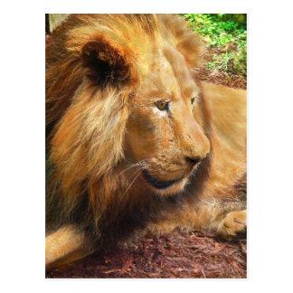 king lion postcard