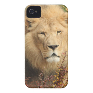 King of the Jungle iPhone 4 Cover
