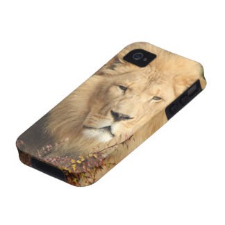 King of the Jungle Case-Mate iPhone 4 Cover