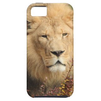 King of the Jungle iPhone 5 Cases