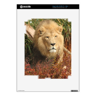 King of the Jungle Decal For iPad 2
