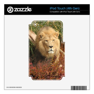 King of the Jungle Decal For iPod Touch 4G