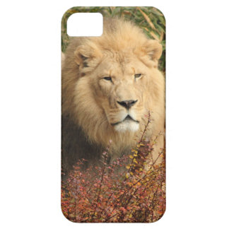 King of the Jungle iPhone SE/5/5s Case