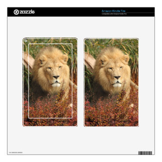 King of the Jungle Kindle Fire Decal