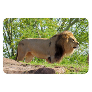 King of the Jungle (Lion) Magnet