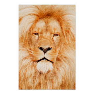 KING OF THE JUNGLE POSTERS