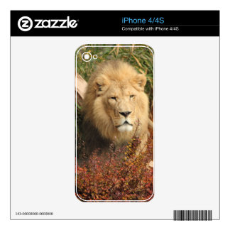 King of the Jungle Skin For iPhone 4