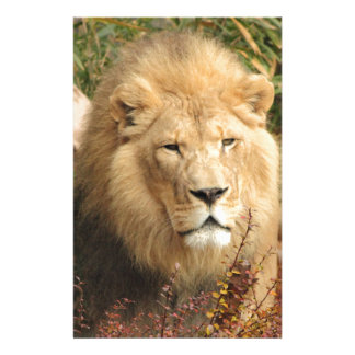 King of the Jungle Stationery