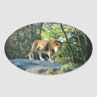 King of the Jungle Stickers