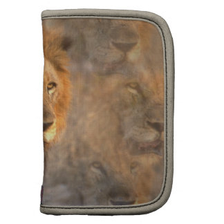 King of the Jungle Wallet Folio Folio Planners