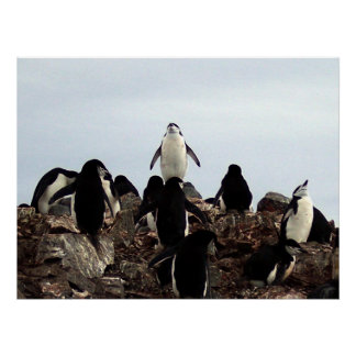 King of the Penguins Poster