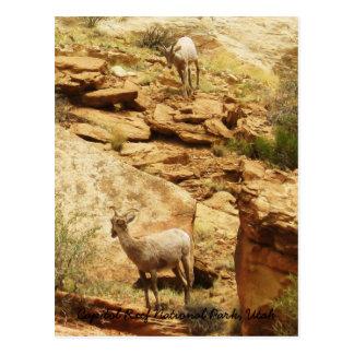 King on the Mountain Postcard