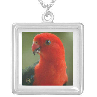 King Parrot Jewelry