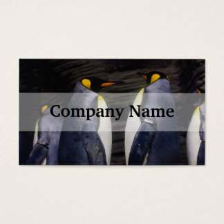 King Penguin, Animal Photography Business Card
