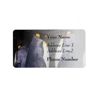 King Penguin, Animal Photography Label