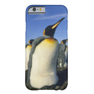 King Penguin, (Aptenodytes patagonicus), 2 Barely There iPhone 6 Case