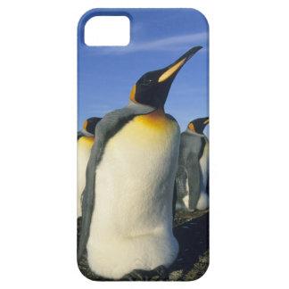 King Penguin, (Aptenodytes patagonicus), 2 iPhone SE/5/5s Case