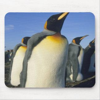 King Penguin, (Aptenodytes patagonicus), 2 Mouse Pad