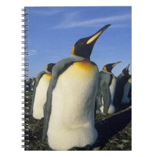 King Penguin, (Aptenodytes patagonicus), 2 Notebook