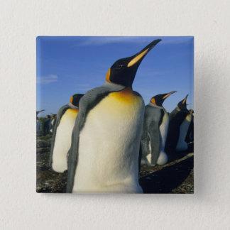 King Penguin, (Aptenodytes patagonicus), 2 Pinback Button