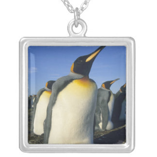 King Penguin, (Aptenodytes patagonicus), 2 Silver Plated Necklace
