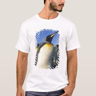 King Penguin, (Aptenodytes patagonicus), 2 T-Shirt