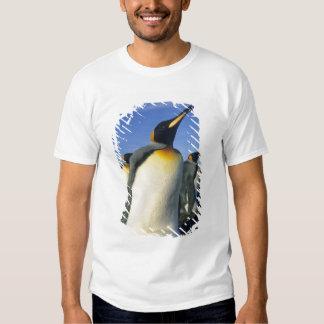King Penguin, (Aptenodytes patagonicus), 2 Tee Shirt