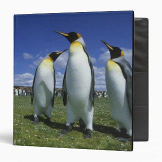 King Penguin, Aptenodytes patagonicus), 3 Ring Binder