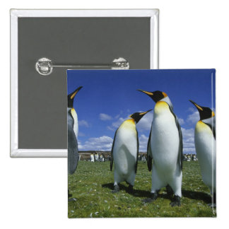 King Penguin, Aptenodytes patagonicus), 2 Inch Square Button