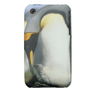 King Penguin Aptenodytes patagonicus iPhone 3 Case-Mate Case