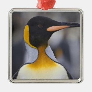 King Penguin Aptenodytes patagonicus), Gold Square Metal Christmas Ornament