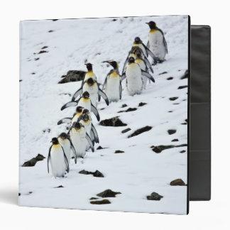 King Penguin Aptenodytes patagonicus) group 3 Ring Binder