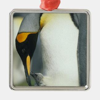 King Penguin, (Aptenodytes patagonicus), Metal Ornament