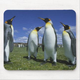 King Penguin, Aptenodytes patagonicus), Mouse Pad