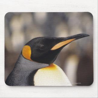 King penguin (Aptenodytes patagonicus) Mouse Pad